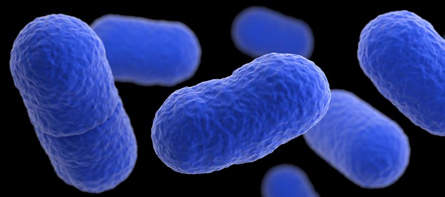 Listeria Monocytogenes. http://www.cdc.gov