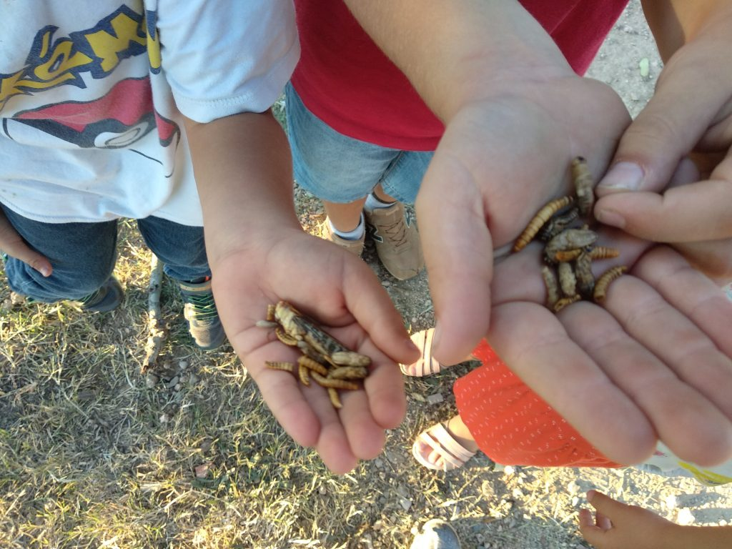 Edible insects and children. Alimentando la inocuidad.